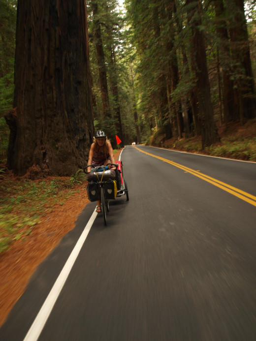 Cycling through the redwoods in Northern California.