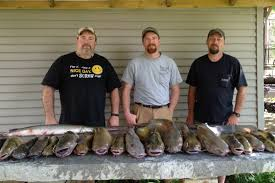 Check out this great catch of channel catfish caught in the river. Nice catfish there.