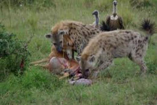 Fauna of Africa