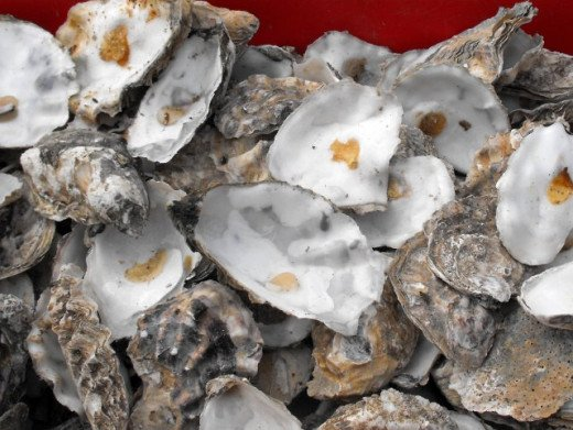Oyster Shells by Penny Mayes (Creative Commons licensed)