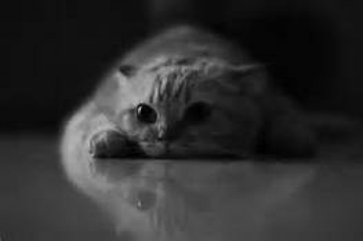 Alas, I bounce around this aimless litter box called life....