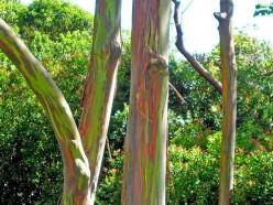 Rainbow Plants and Animals