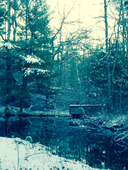My Pond….after an early snowfall.