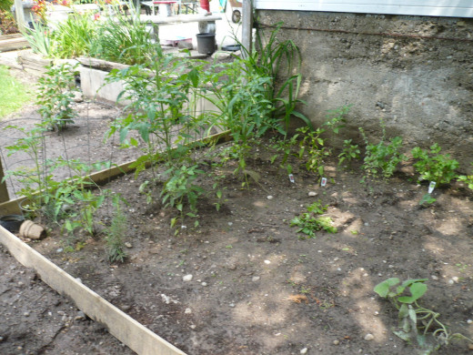 I tried a lot of these frugal garden tips on this garden and they worked.