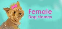 Unique Girl Dog Names That Will Make Others Green With Envy