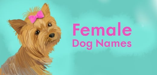 300 Unique Girl Dog Names That Will Make Others Green With Envy