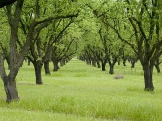 A clean orchard