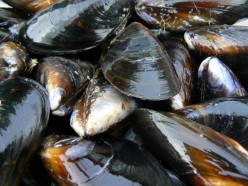 Make a simple Sautéed Mussels dish!
