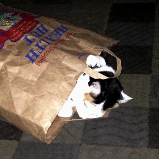 She still loves her paper bags!