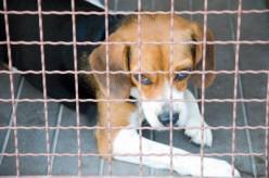 Animal Abuse - Animal Testing