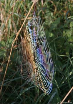 Spiderwebs of Love