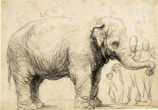 Elephant (c.1637)  black chalk and charcoal Height: 17.9 cm (7 in). Width: 25.6 cm (10.1 in)