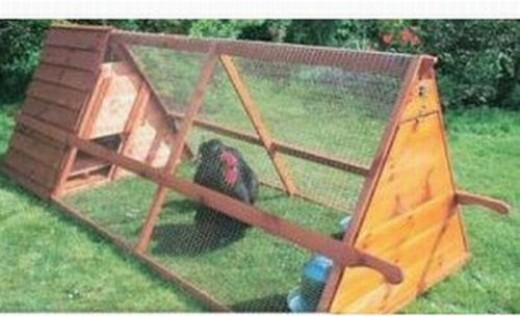 chicken coop inside. A chicken grazing inside a