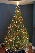 Tips for Choosing Christmas Trees at Cut Your Own Tree Farms