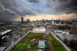 Feeding the Rooftop Garden