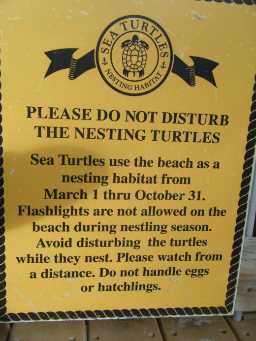 More informational sea turtle signs