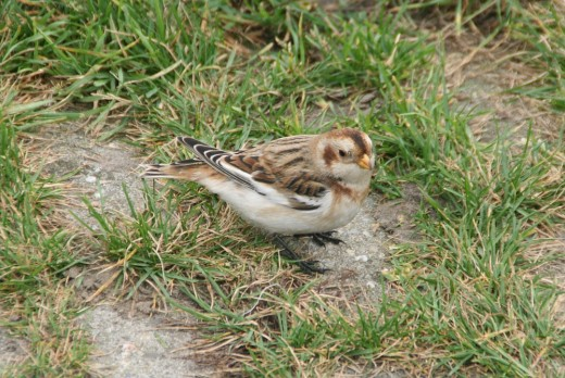Taken at Whitley Bay Northumberland {England}