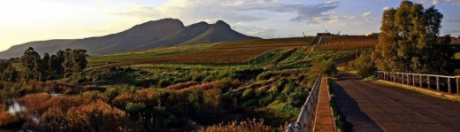 The Swartland Wine & Olive Route