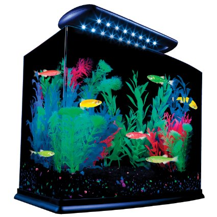 GloFish Aquarium Kit As It Looks Set Up