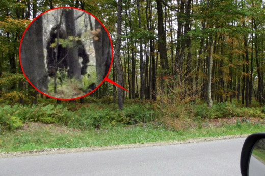 A photograph taken by John Stoneman near Bradford, Pennsylvania, October 2013 showing the evidence of a supposed to be Bigfoot