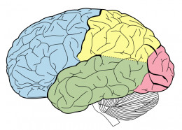 Playing a musical instrument allows multiple areas of your brain become engaged and active unlike any other activity