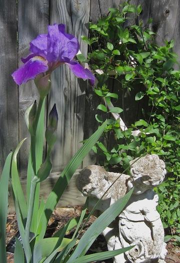 Renoir's Favorite Iris