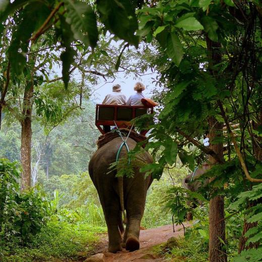 Elephant Trekking at Chiang Rai