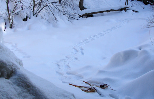My snowshoes and tracks at the base of Borer's Falls which I used to reach the falls