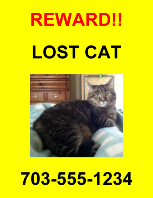 Example of a Lost Pet Poster