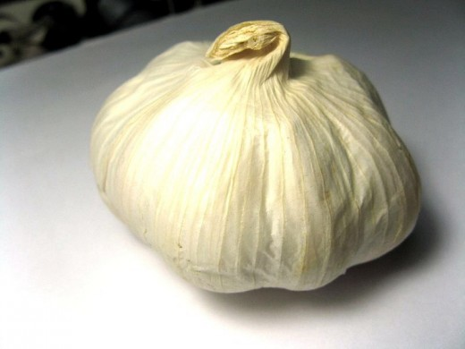 Garlic is used both as a culinary and medicinal herb.