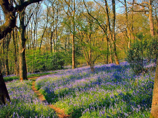 The timeless beauty of Middleton Woods, with an abundance of bluebells and wildlife.