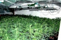 Tips To Grow Medical Marijuana in a Hydroponic Setup