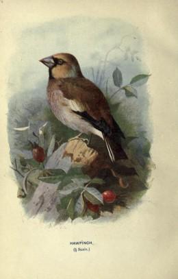 Swaysland, Familiar Wild Birds.