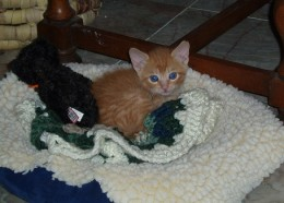 Here he is when we first got him. I wish he was still so small and cute!