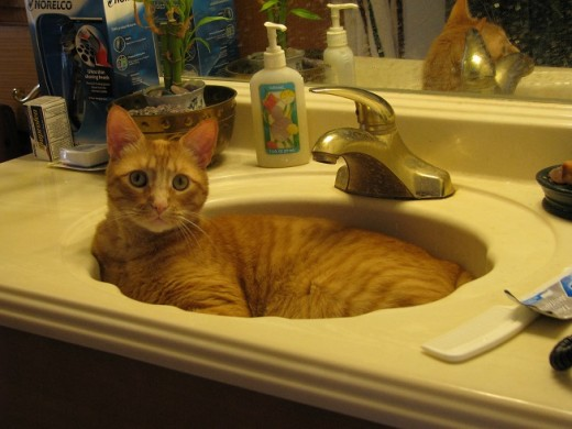 Now he's 20 lbs and thinks he's so cute sitting in the sink.