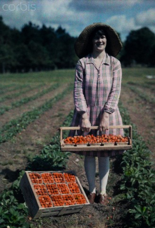 Girl in strawberry patch somewhere in California in the late 1940s selling fresh strawberries