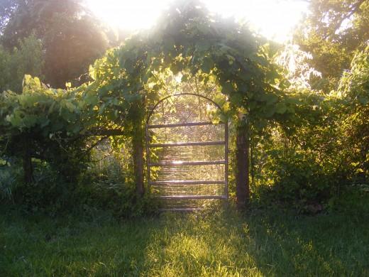 The Gate at Sunrise