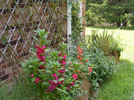 Sun, Soil, and Companionship