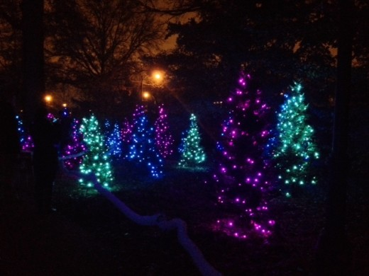 More lit up trees at the Garden Glow, with purple, green and blue lights.