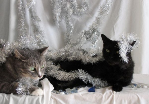 Cats must stay clear of Tinsel