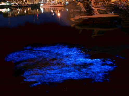 Also called phosphorescence, bioluminescent plankton glows best on a dark night. Can you imagine a whole lagoon looking like this?