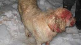 Angel, the injured dog.