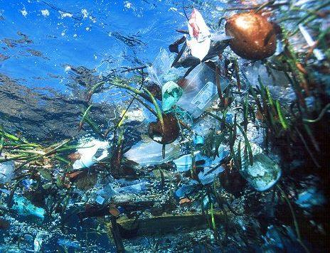 Pollution of our oceans, harmfully effects the marine environment, as well as its inhabitants.