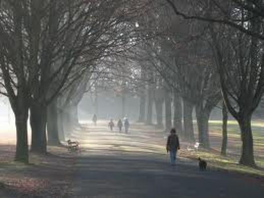 morning walk in winter