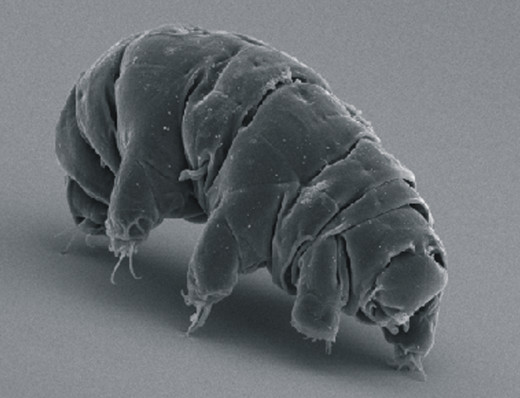 Here comes the water bear!
