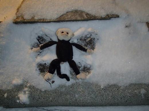 Mooch's Snow Angel in North Carolina