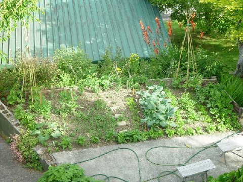Vegetable plot in Spring time