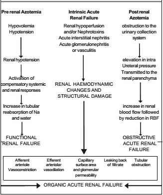 Causes of Renal Failure in General