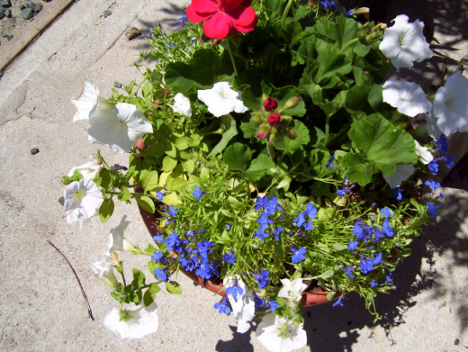 A patriotic planter assembled from a pot, soil, and plants of patriotic colored flowers.