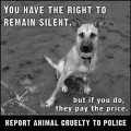 What To Do If You Suspect Animal Abuse